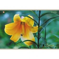 Альбом д/рис А4 16л скрепка, обложка картон, офсет 080 г/м2, Жёлтая лилия